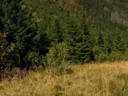 Bukowina tatrzańska – wspaniałe miejsce na aktywny wypoczynek i poznanie kultury góralskiej
